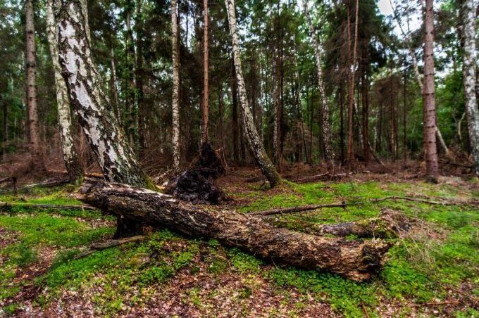 Leśne zacisze nad wybrzeżem