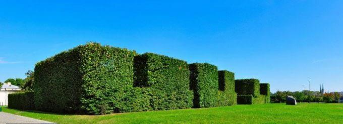 Labirynt krzewów