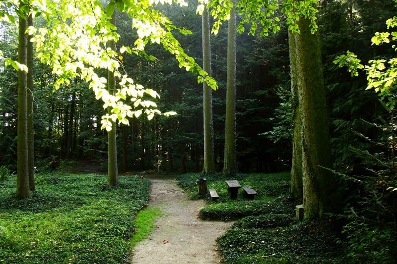arboretum-wirty
